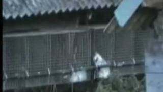 FFF Part 1Undercover Investigation into all known Fur Factory Farms in Ireland Part 1