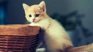 Фото красивых котиков