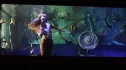 The Dive Bar Mermaids - Video by Scot Benton