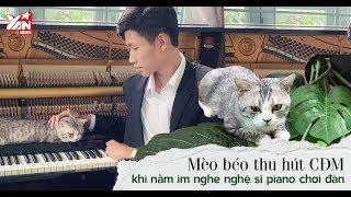 Mèo Haburu béo thu hút CĐM khi nằm im nghe nghệ sĩ chơi đàn