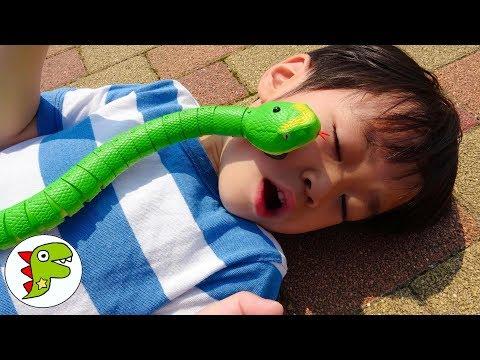 Catch the snake!!レオくんがヘビのラジコンで遊ぶよ!逃げたヘビを追いかけるよ! トイキッズ
