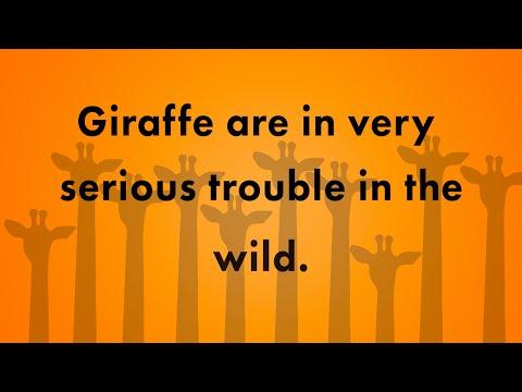 Bristol Zoo Endangered Animal Giraffe Appeal
