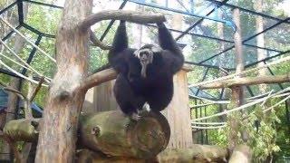 Обезьяна - Новосибирский зоопарк. Очень смешная.