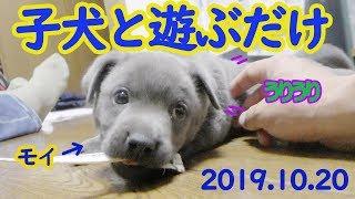 Name: Moi 25cm 2.0kg 40days old.2019.10.17 服部桜を応援する非公式チ...