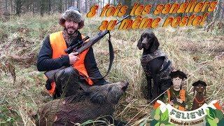 Deux très belles battues de chasse au sanglier, 8 fois les sangliers au même poste, Sauer 404 MP3