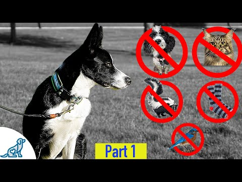 Teach Your Dog To Leave It And Ignore Distractions - Professional Dog Training Tips