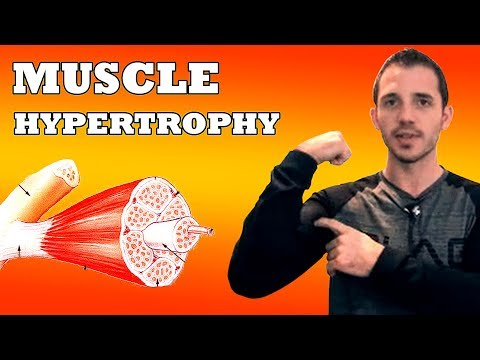 What is Muscle Hypertrophy: 5 Min Phys