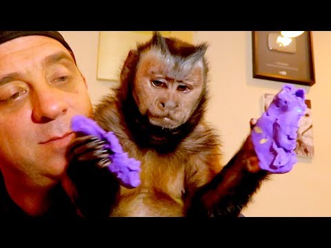Monkey LOVES Play-Doh