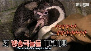 너네 카메라 피할때부터 알아봤다..  -수상한 펭귄부부-ㅣThe penguin couple wasn't incubating an egg but a...!!