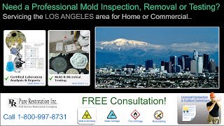 Mold Inspection Mold Testing