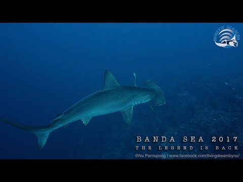 Banda Sea 2017 | The Legend is back(4K)