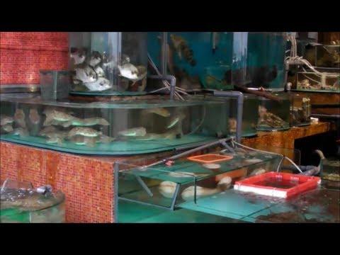 Live Fish and Seafood Restaurants in Sai Kung, Hong Kong. Part 2