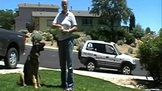 "Teaching The ""look"" Command, Dog Gone Amazing Dog Training, Reno Nv"