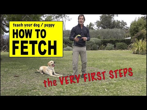 Teach Your Dog to FETCH - The RETRIEVE COMMAND - phase 1 - Dog Training Video