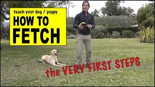 Teach Your Dog to FETCH  The RETRIEVE COMMAND  phase 1  Dog Training Video