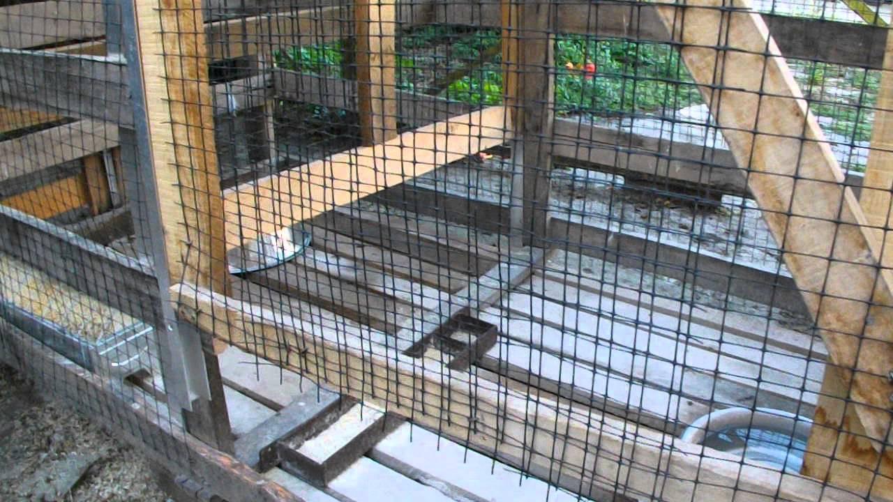 Come costruire una gabbia per canarini o costruire una ...