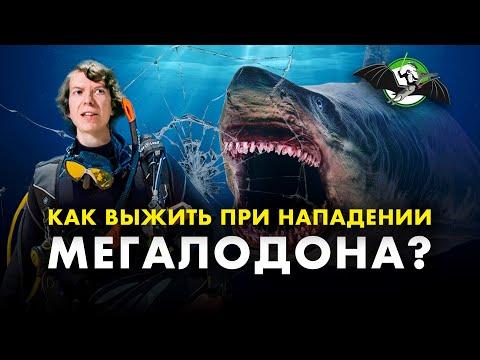 Правда о тупых и кровожадных акулах. Мегалодон жив! Ярослав Попов. Ученые против мифов 12-2