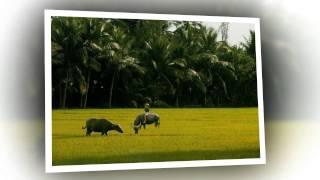 Cảnh đẹp quê hương  Ninh Hòa