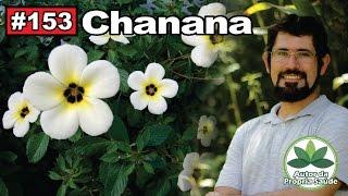Autor da Própria Saúde - Chanana [HIV, câncer de mama, gastrite, diabetes, antibiótico] thumbnail