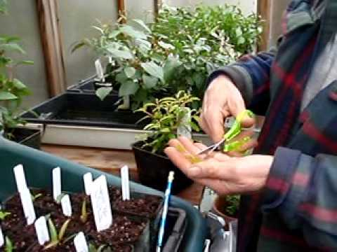 Making Cuttings with Sue Randall