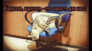 Кот катается на стуле. Смешной кот Вирсик.