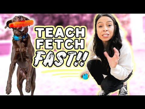 TRAIN YOUR DOG FETCH FAST  NEW! 3 Step Strategy that works on any dog