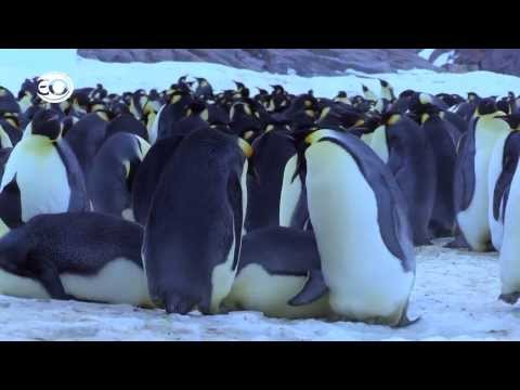 Pinguins Undercover - de bloopers