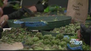 Should Arizona voters legalize recreational marijuana?