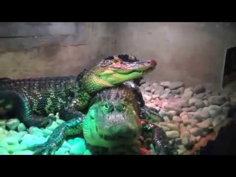Visit to Reptilia (Reptile Zoo)