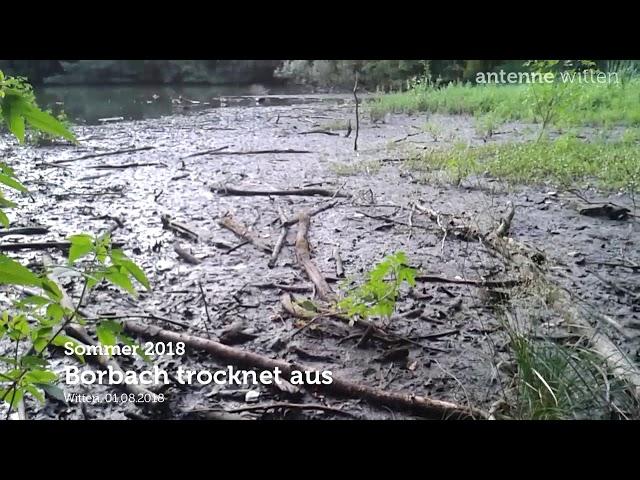 Witten: Der Borbach trocknet aus (01.08.2018)