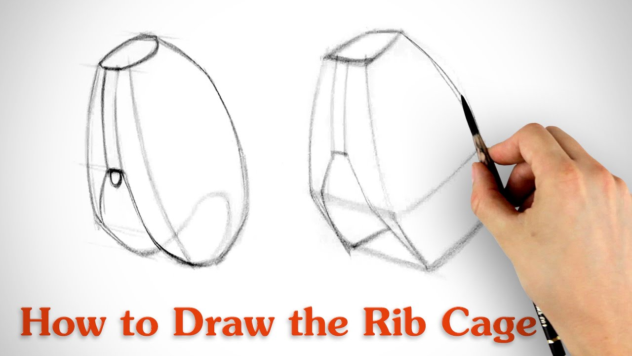 How to Draw the Rib Cage - Human Anatomy for Artists - YouTube