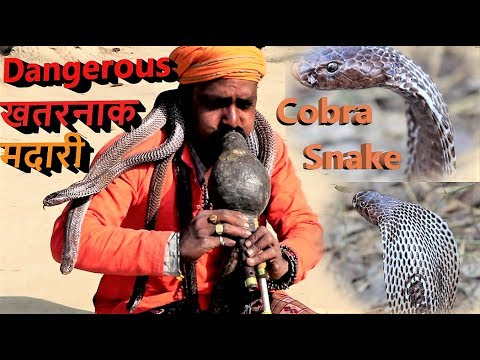 Snake Charmer Who Save people from Danger Snake bite and Live With Cobra snake