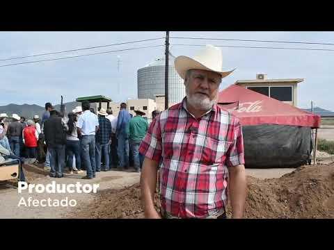 Productores del Valle del Carrizo afectados por la falta de pago de sus cosechas
