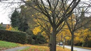 Mark Petalcorin - Just Mere Words (original song)