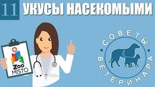 Укусы насекомыми | Что делать если Вашу собаку или кошку покусали насекомые | Советы Ветеринара