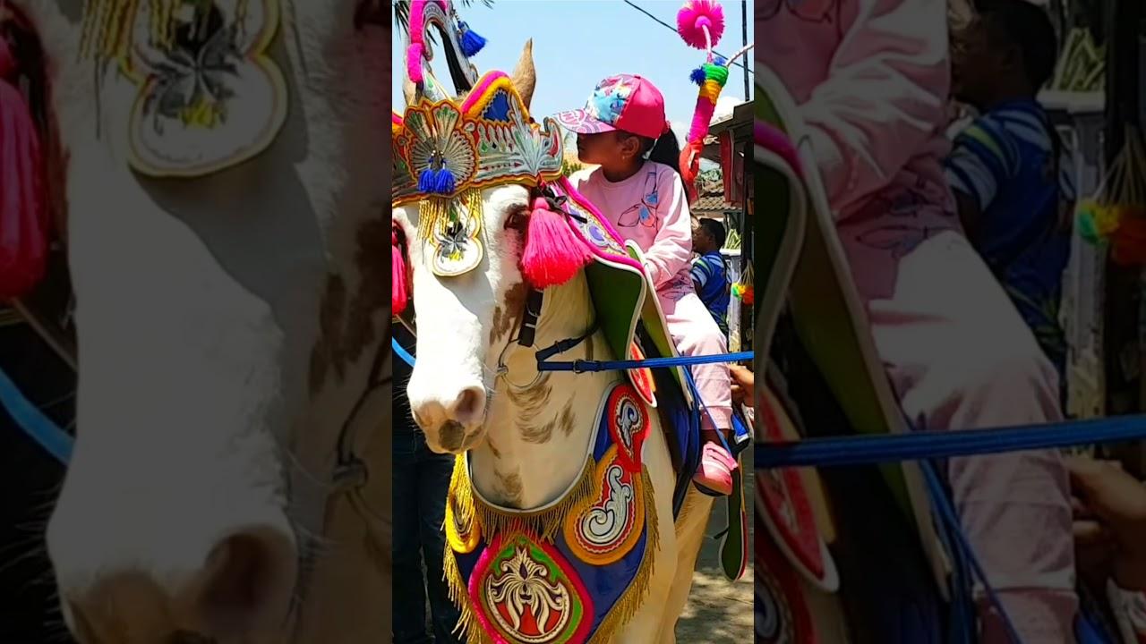 kuda renggong dancing horse , naik kuda putih cantik belasteran