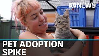 Pet adoption surge as Australians begin work from home | ABC News