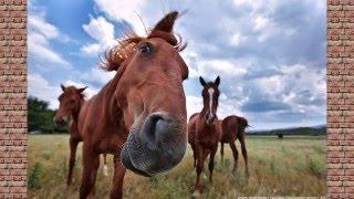 Лошади фото/Horses photo