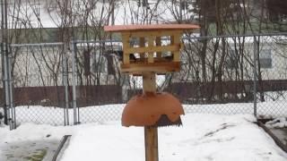 Dove Proofing My Backyard Bird Feeder