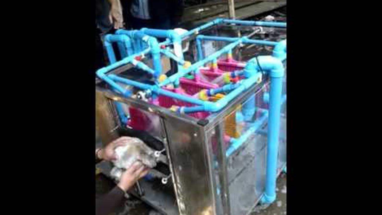 Automatic Dog Washing Machine Viralhog Youtube