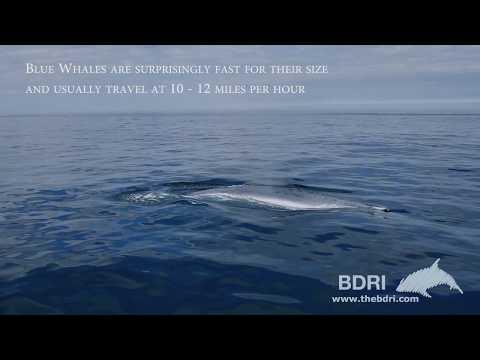 A balea azul filmada baixo as augas de Galiza