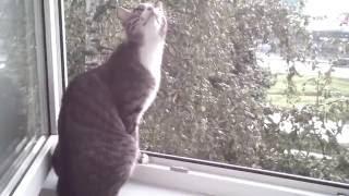 кот ловит дождь