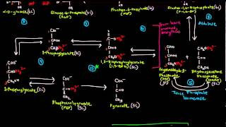 Glycolysis (Part 2 of 3) - The 10 Steps