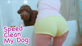 How To Speed Clean My Dog Tips And Tricks