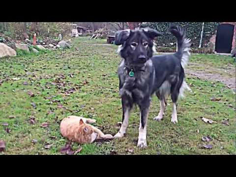 Dog vs. cat fight