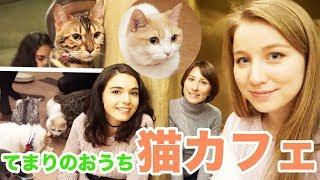 犬派なのに猫カフェへ?!ロシア人、ウクライナ人、カナダ人で行ってみた!猫カフェ「てまりのおうち」