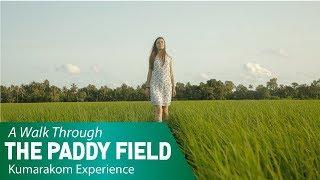 A Walk Through the Paddy Field | Kumarakom Experience