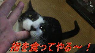 """【観覧注意!】猫がイキナリ飼い主の手をガブリ!いったい何が? Cat eating finger! ? """""""