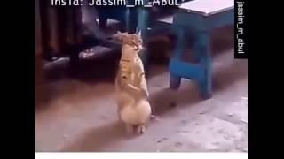 vuclip الأم إذا شافت بنتها ترقص بالعرس 😂