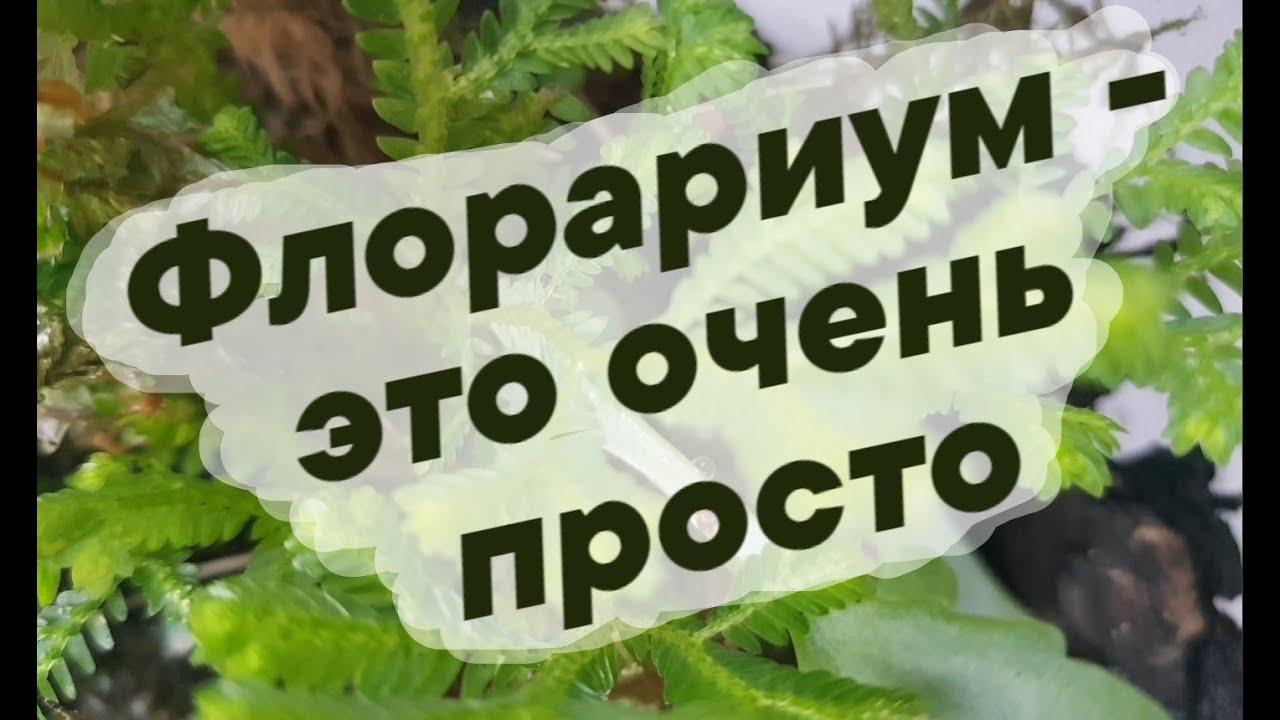 Флорариум - это очень просто. Сравниваем флорариум с цветочным горшком  // Дети Алоэ